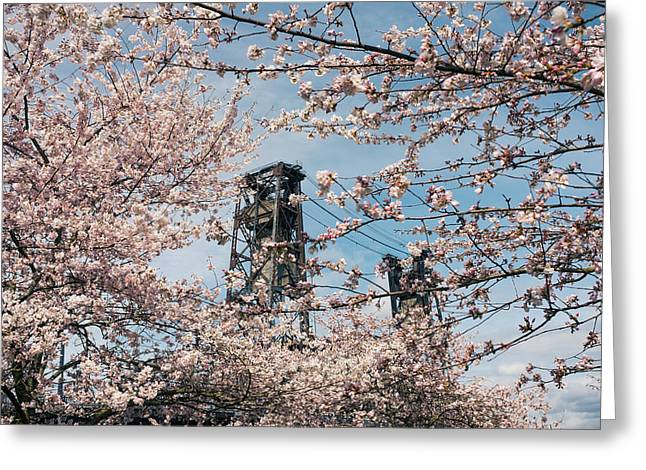 Portland Cherry Blossoms Greeting Card