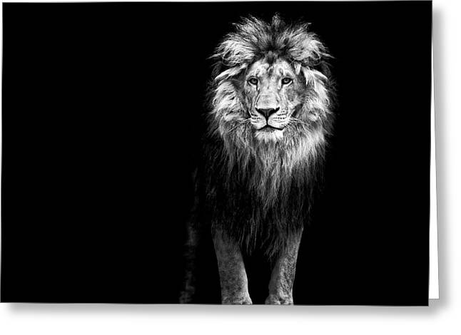 Portrait Of A Beautiful Lion, In The Greeting Card by Baranov E