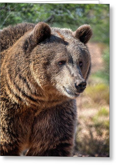 Portrait Of A Female Grizzly Bear Greeting Card