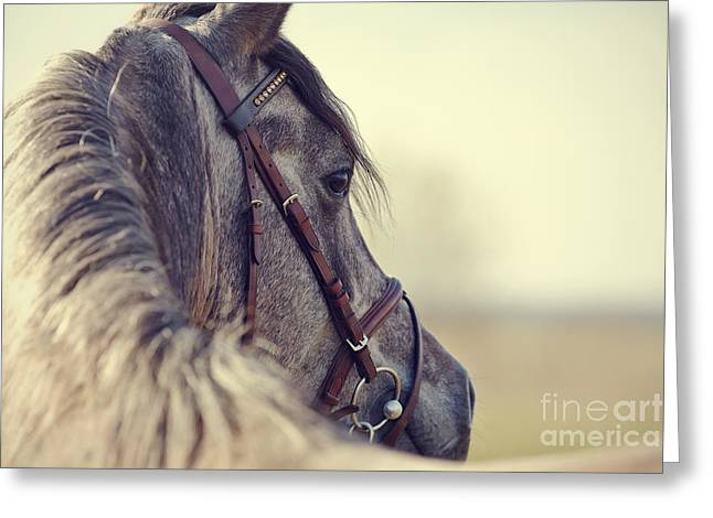 Portrait Of A Sports Stallion In A Greeting Card