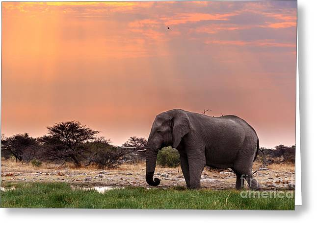 Portrait Of African Elephants With Dusk Greeting Card