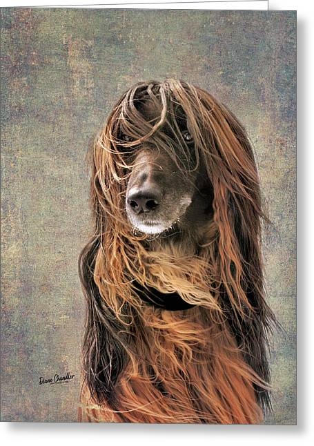 Portrait Of An Afghan Hound Greeting Card