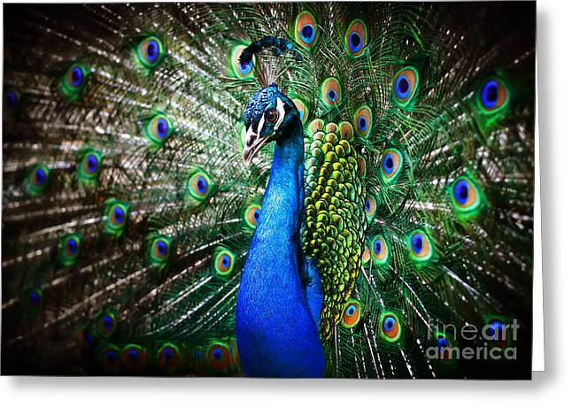 Portrait Of Beautiful Peacock With Greeting Card