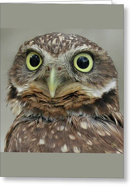 Portrait Of Burrowing Owl Greeting Card