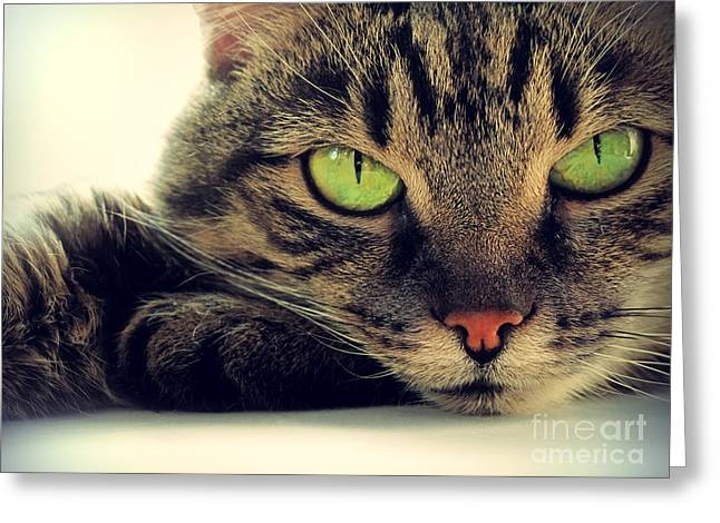 Portrait Of Green-eyed Cat Greeting Card