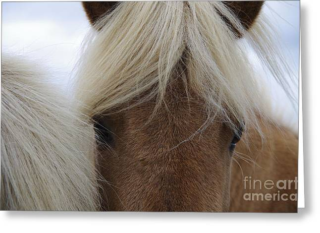 Portrait Of Icelandic Horses With Long Greeting Card
