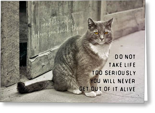 Pretty Kitty Quote Greeting Card by JAMART Photography