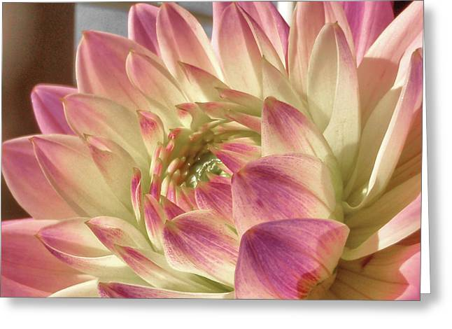Pretty Pink Greeting Card by JAMART Photography