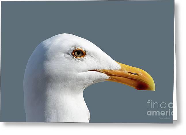 Pretty Western Gull In Profile Greeting Card