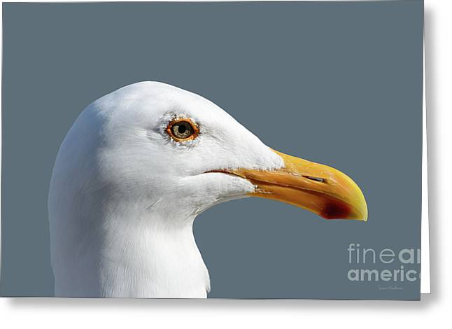 Pretty Western Gull In Profile Greeting Card