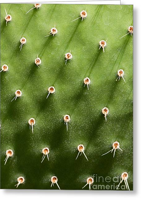 Prickly Pear Cactus Close Up Greeting Card by Sumikophoto