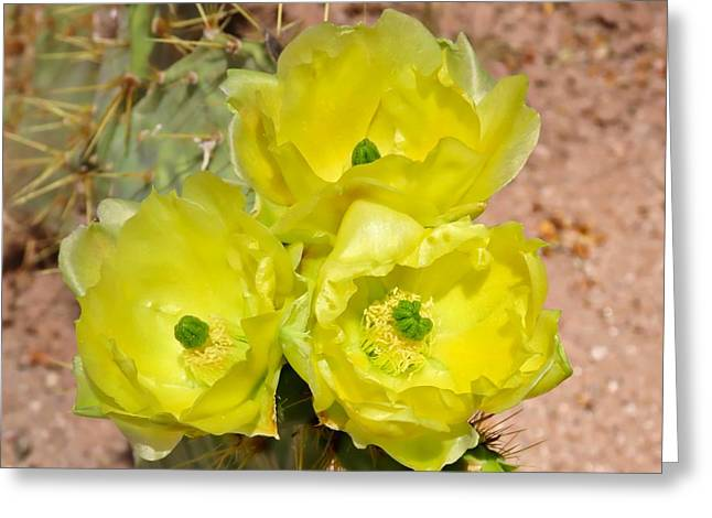 Prickly Pear Cactus Trio Bloom Greeting Card