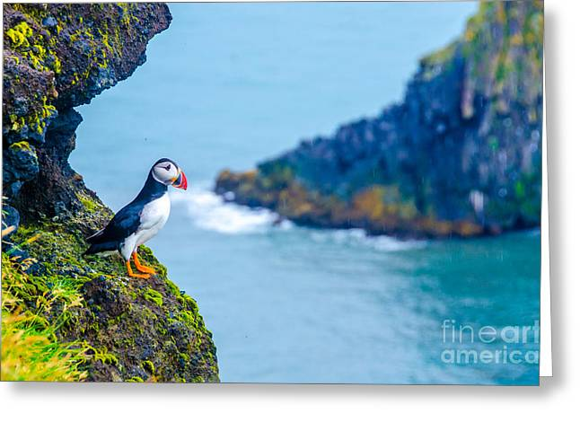 Puffin - Iceland Greeting Card
