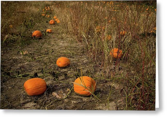 Pumpkins Lying In A Field Greeting Card