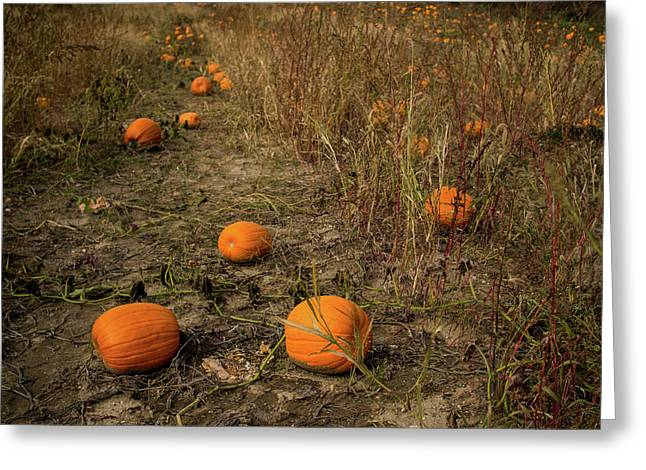 Pumpkins Lying In A Field Greeting Card