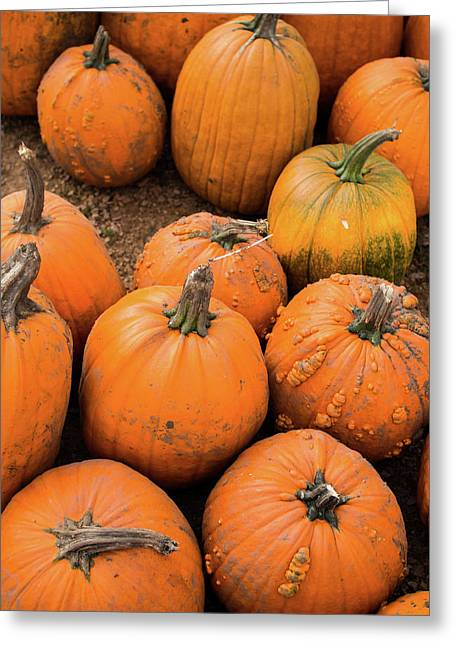 Pumpkins Of Different Shapes Greeting Card