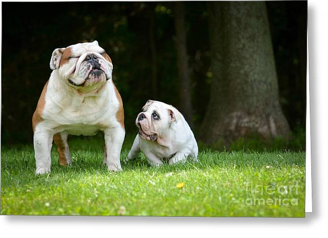 Puppy And Adult Dog Playing Outside - Greeting Card