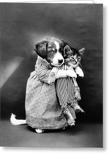 Puppy Holding A Kitten - The Nurse - Harry Whittier Frees Greeting Card
