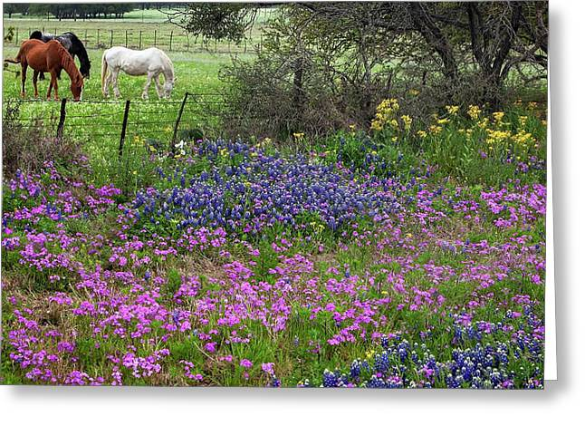 Bluebonnets And Pure Texas  Greeting Card