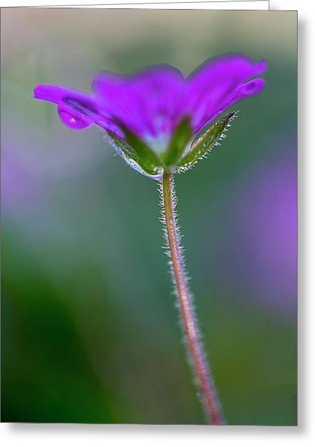 Greeting Card featuring the photograph Purple Flower by John Rodrigues