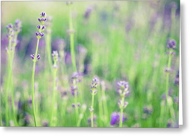 Greeting Card featuring the photograph Purple Flowers by Nicole Young