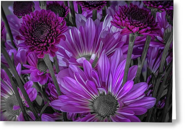 Purple Power Chrysanthem Selective Colorum  Greeting Card