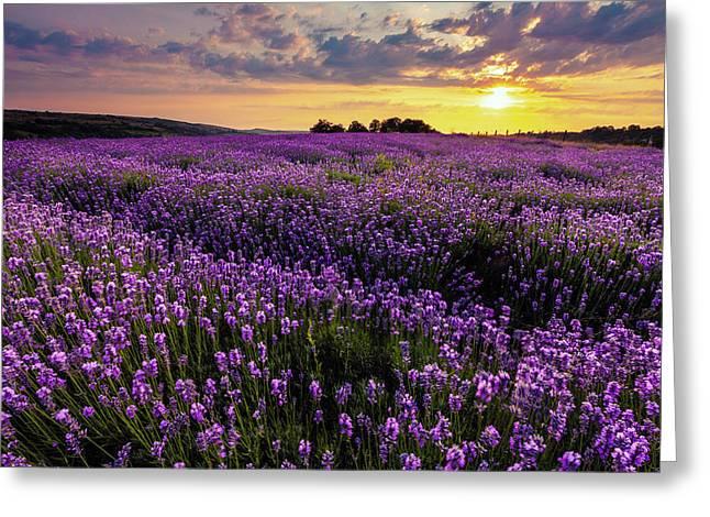 Purple Sea Greeting Card