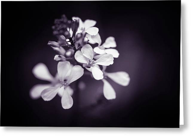 Greeting Card featuring the photograph Purple Tears by Michelle Wermuth