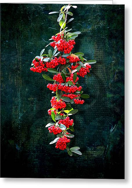 Pyracantha Berries - Do Not Eat Greeting Card