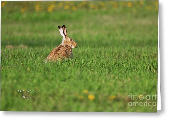 Rabbit Chews Greeting Card