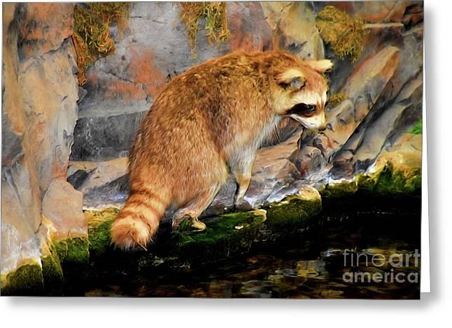 Raccoon 609 Greeting Card