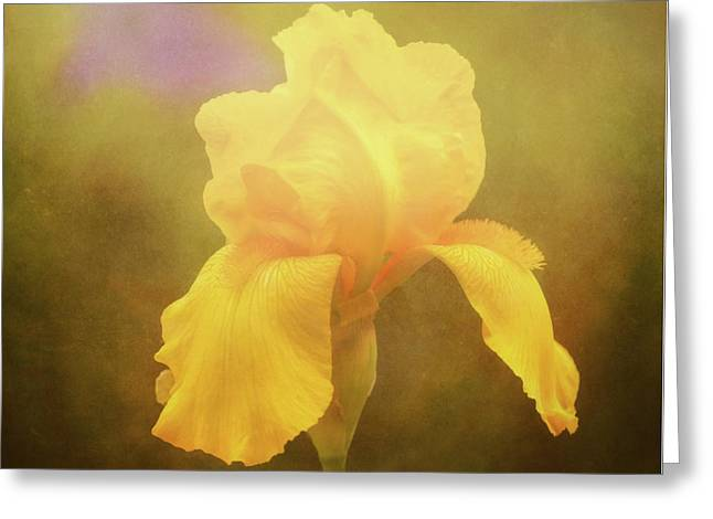 Radiant Yellow Iris With A Vintage Touch Greeting Card