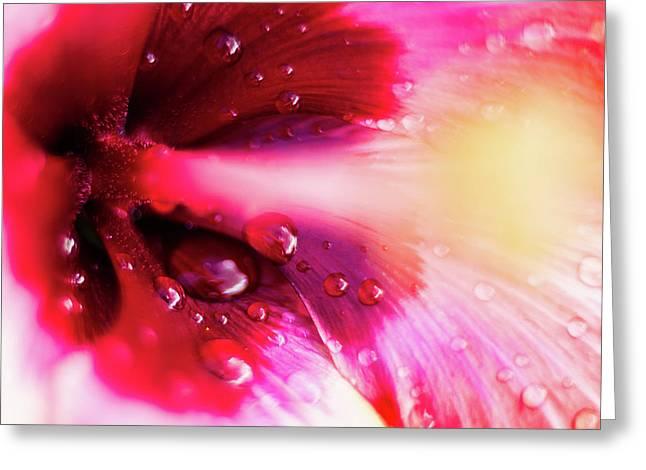 Rain Flower Greeting Card