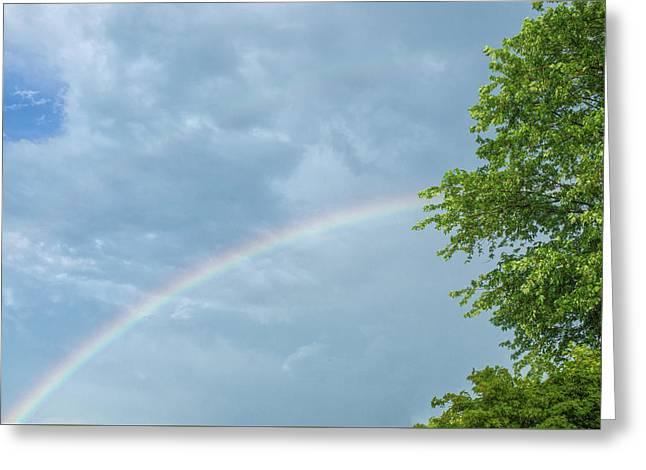 Rainbow And A Tree Greeting Card