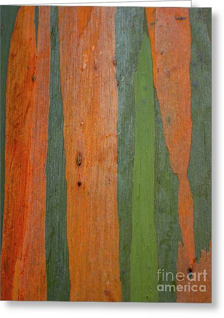 Greeting Card featuring the photograph Rainbow Eucalyptus Bark by Charmian Vistaunet
