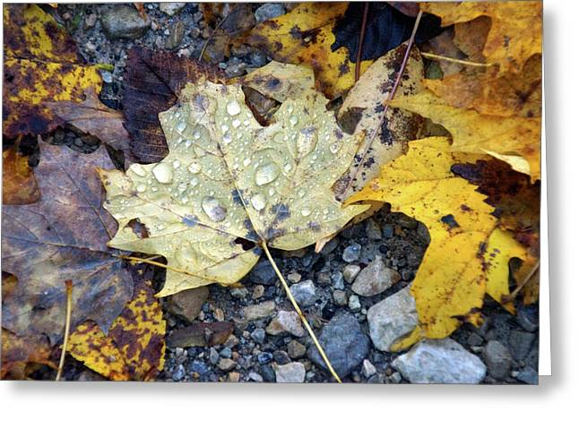 Greeting Card featuring the photograph Rainy Autumn Day by Mike Murdock
