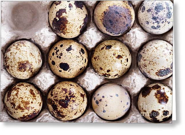 Raw Quail Eggs In Egg Holder From Above Greeting Card