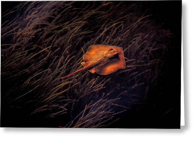Ray In The Grass Flats Greeting Card