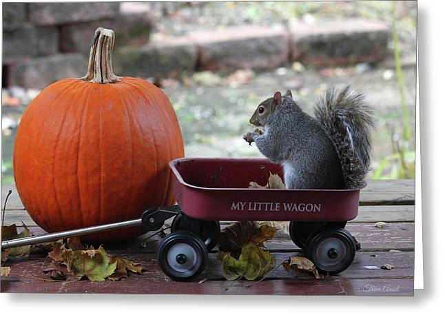 Ready To Ride My Little Red Wagon Greeting Card
