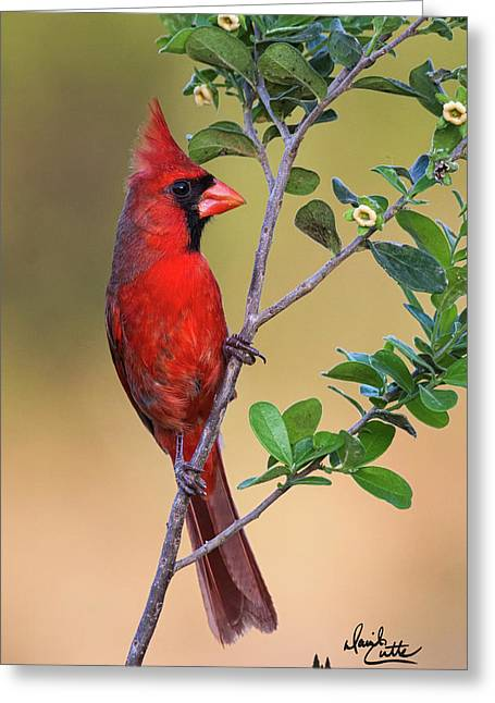 Red All Over Greeting Card