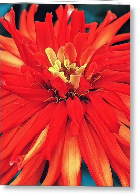 Greeting Card featuring the digital art Red Bliss by Cindy Greenstein