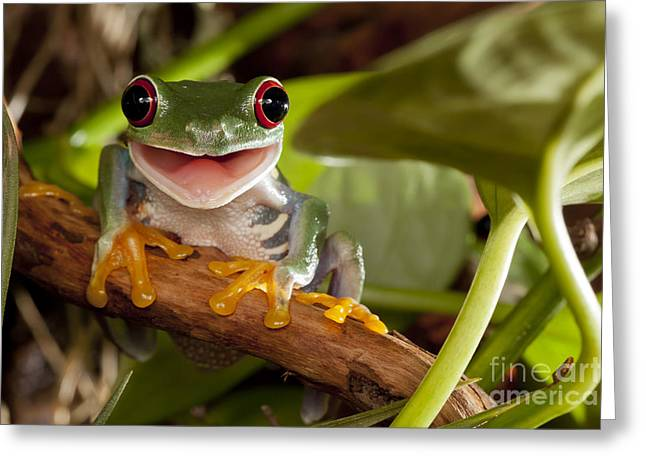 Red-eyed Tree Frog Smile Greeting Card