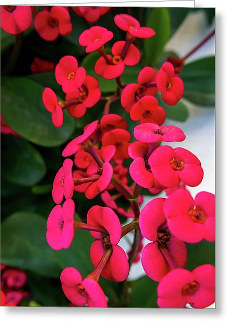 Red Flowers In Bloom Greeting Card