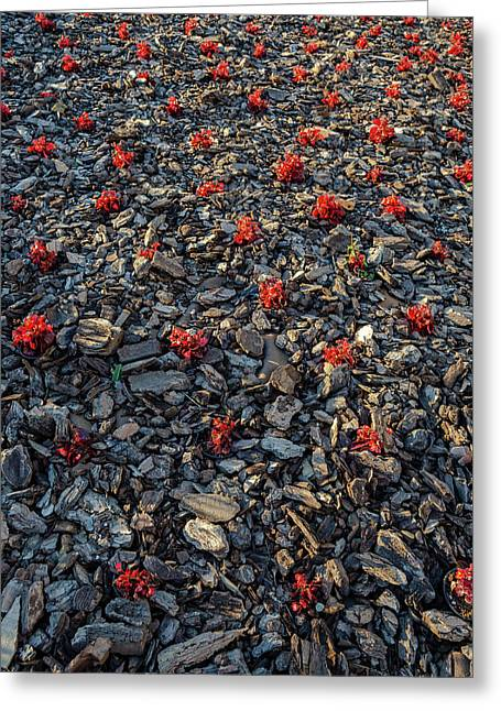Red Flowers Over Stones Greeting Card