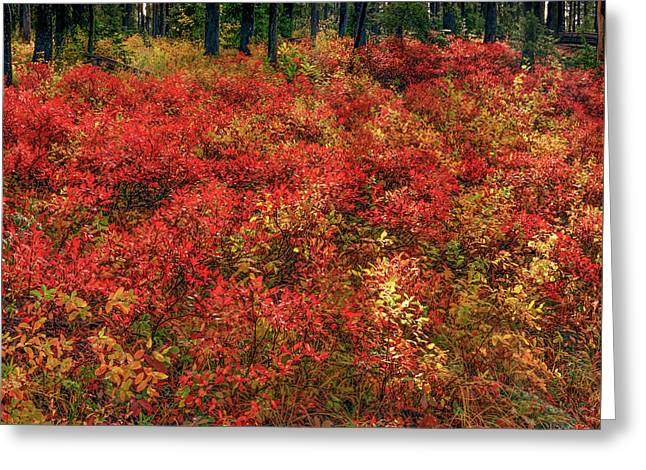 Red Forest Light Greeting Card by Leland D Howard