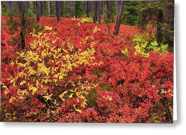 Red Forest Panoramic Greeting Card by Leland D Howard