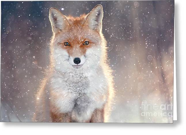 Red Fox In Winter Forest Pretty Greeting Card