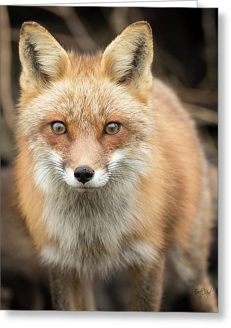 Red Fox Stare Greeting Card