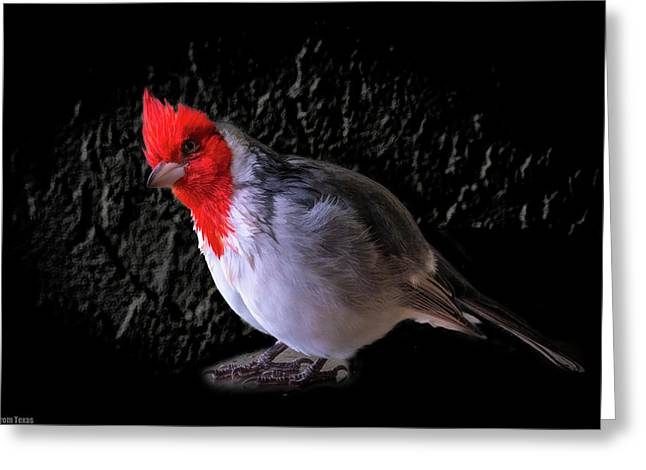 Red Head Greeting Card