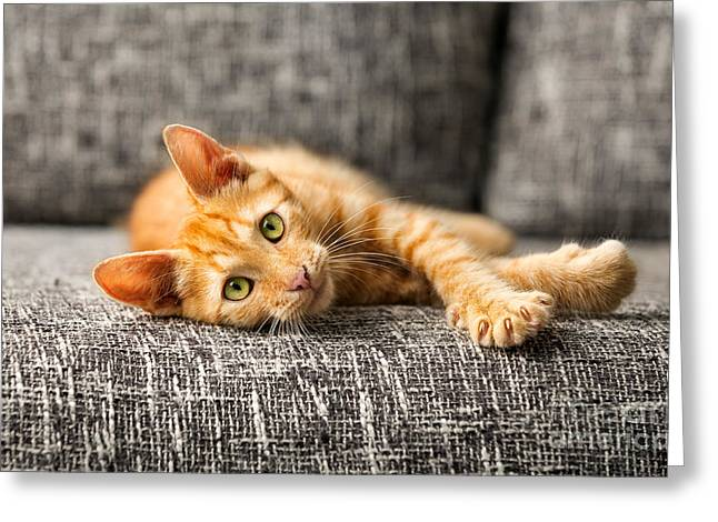 Red Kitten Lying On Bed And Looking At Greeting Card